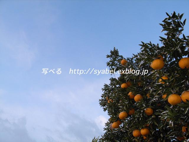 c0153764_1932231.jpg