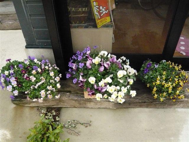 初めて花を育てた智ちゃんのスモールガーデン_b0137969_1956474.jpg