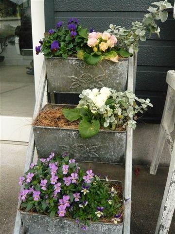 初めて花を育てた智ちゃんのスモールガーデン_b0137969_2093616.jpg