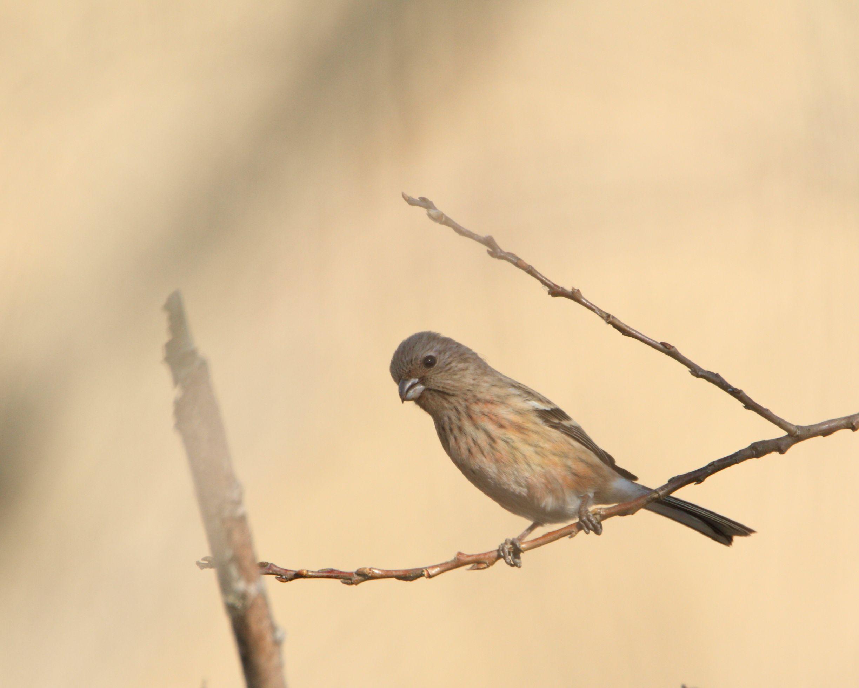 可愛い小鳥も撮ってます。_f0105570_21522960.jpg