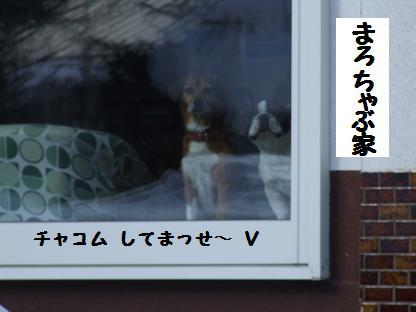 f0150377_91763.jpg
