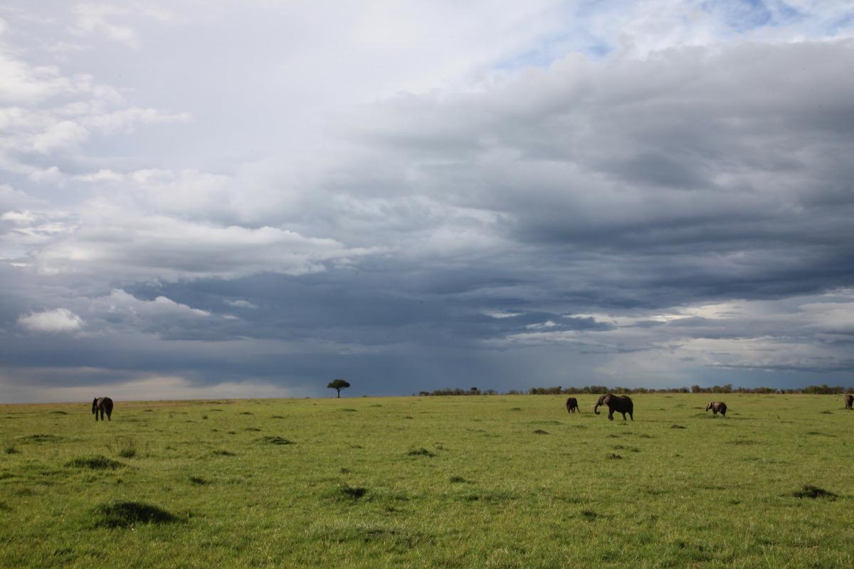 ケニア旅行記 ファイナル_c0187779_5193630.jpg