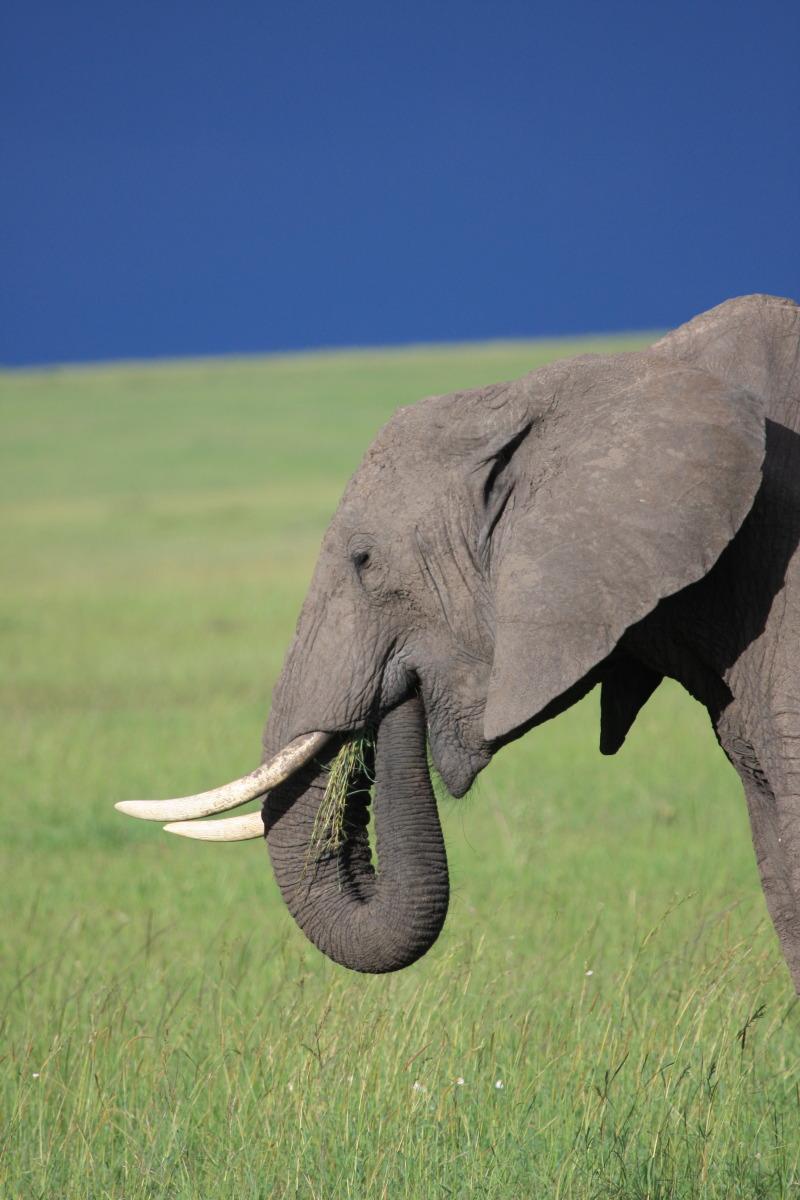ケニア旅行記 ファイナル_c0187779_5264524.jpg