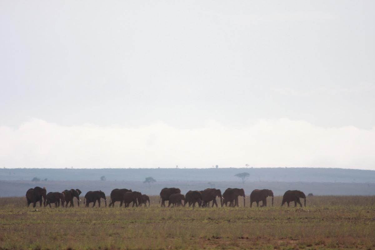 ケニア旅行記 ファイナル_c0187779_5283626.jpg