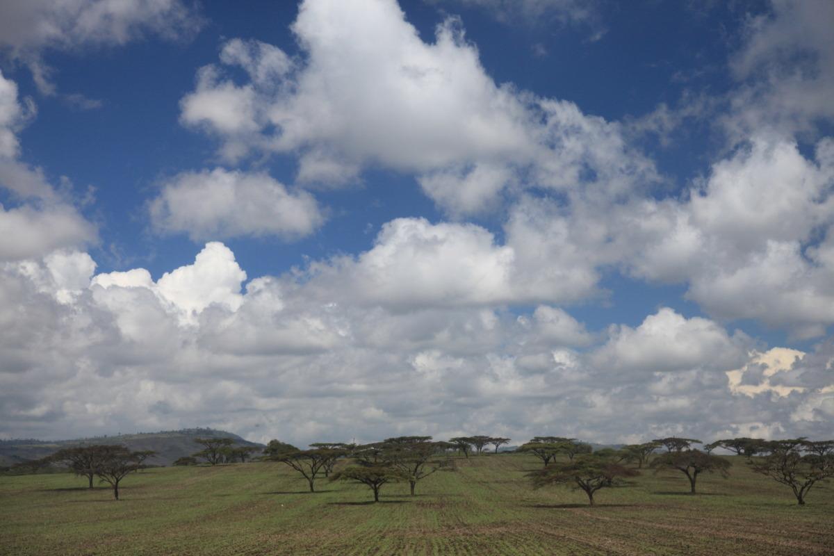 ケニア旅行記 ファイナル_c0187779_5411982.jpg