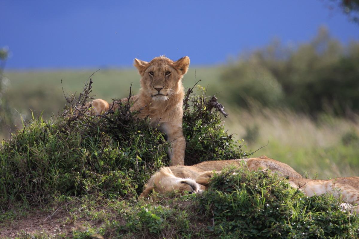 ケニア旅行記 ファイナル_c0187779_5591897.jpg