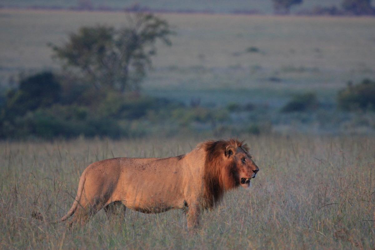 ケニア旅行記 ファイナル_c0187779_601743.jpg