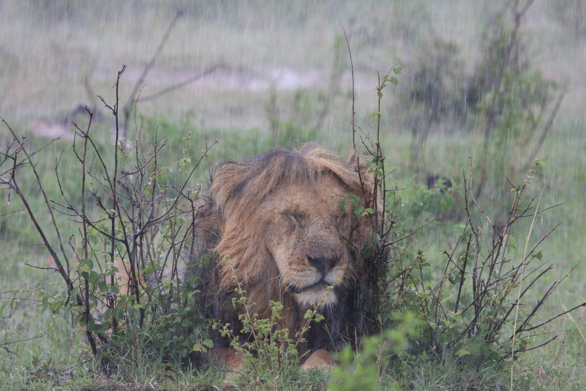 ケニア旅行記 ファイナル_c0187779_611959.jpg