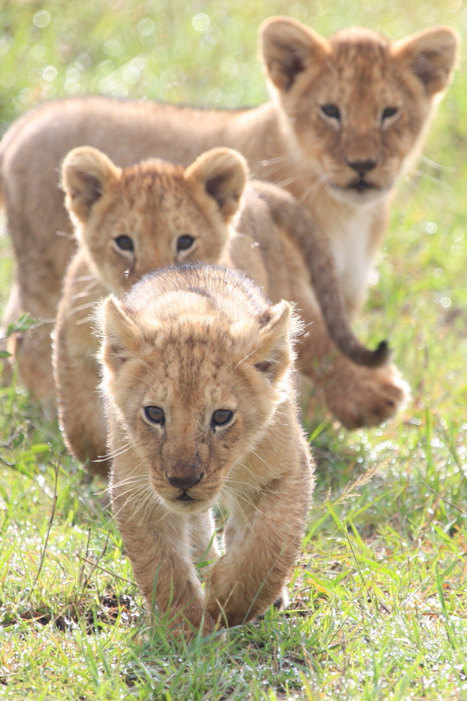 ケニア旅行記 ファイナル_c0187779_621992.jpg