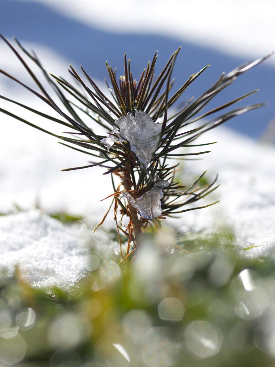 雪解け、陽だまり、キラキラ_f0121181_21242751.jpg