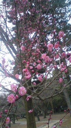 春・・・木々の芽吹き&エネルギー♪_f0028791_17355458.jpg