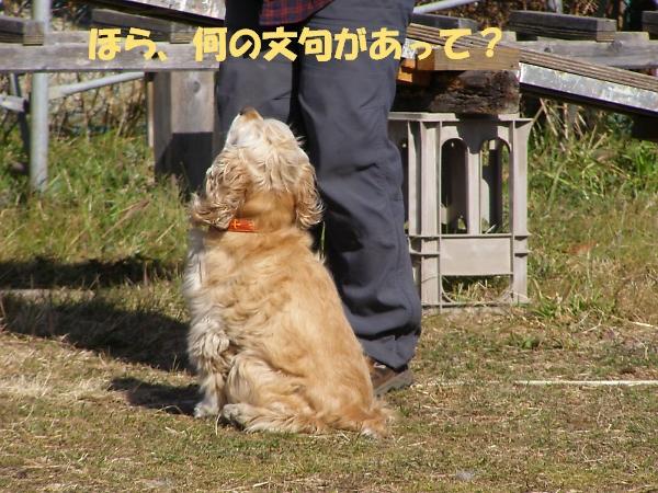 b0067012_0473217.jpg