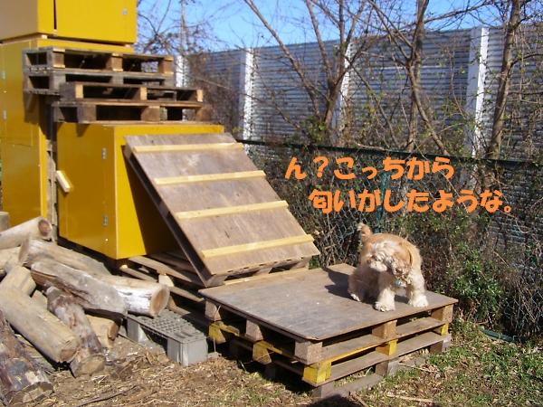 b0067012_0525940.jpg