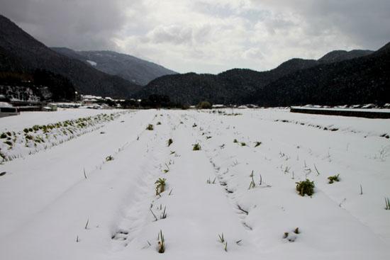 大原の里 雪景色_e0048413_23272982.jpg