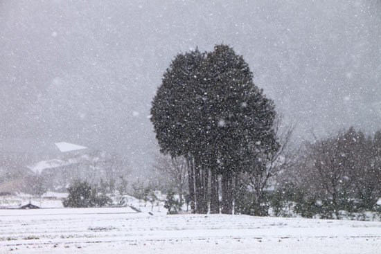 大原の里 雪景色_e0048413_23274212.jpg