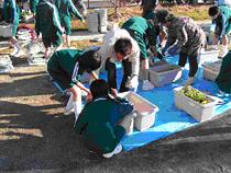菜の花エコで環境学習!_c0091821_21395846.jpg