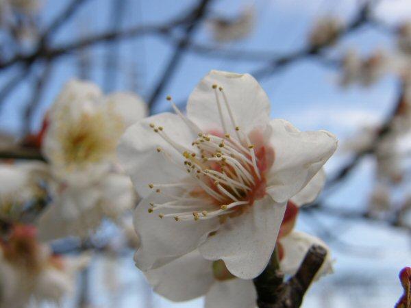 春のいぶき_a0027125_2341110.jpg