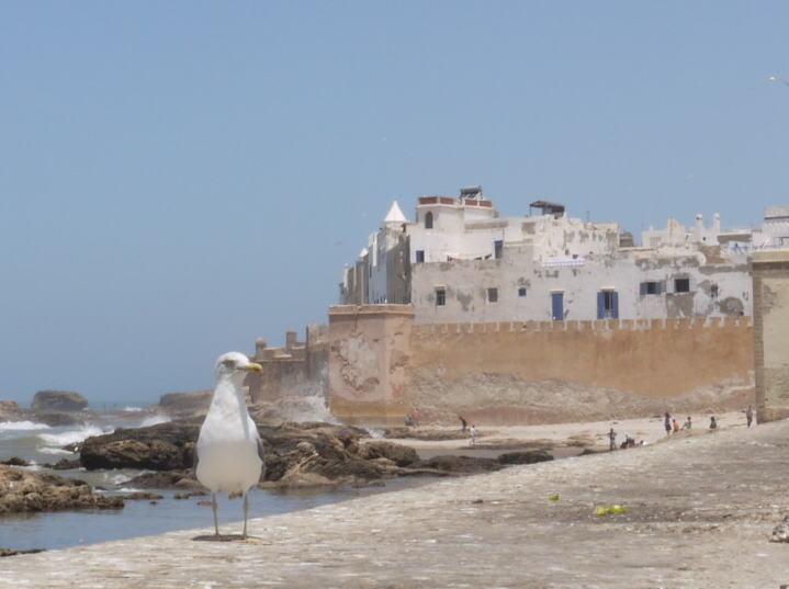 魚と鳥の話 モロッコ_a0042928_0183679.jpg