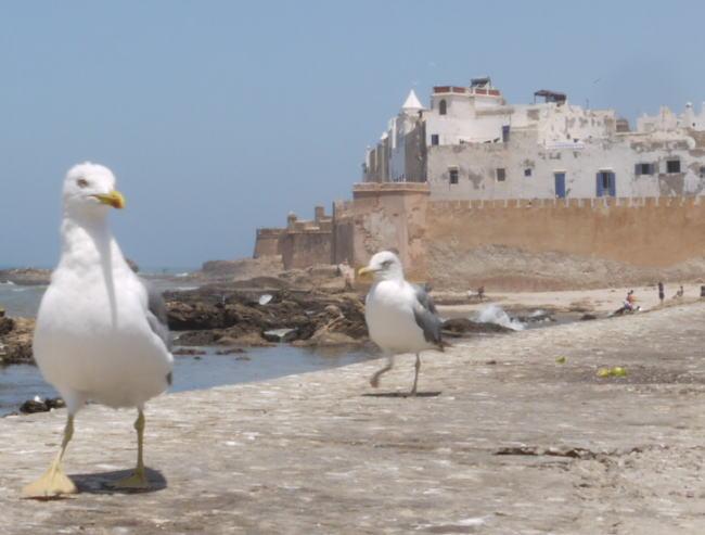 魚と鳥の話 モロッコ_a0042928_0184711.jpg