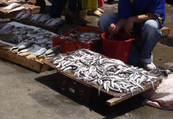 魚と鳥の話 モロッコ_a0042928_0245986.jpg