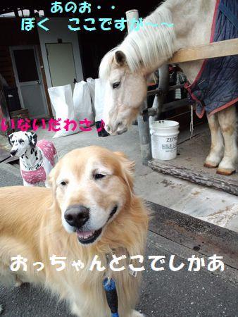 b0127531_1752643.jpg