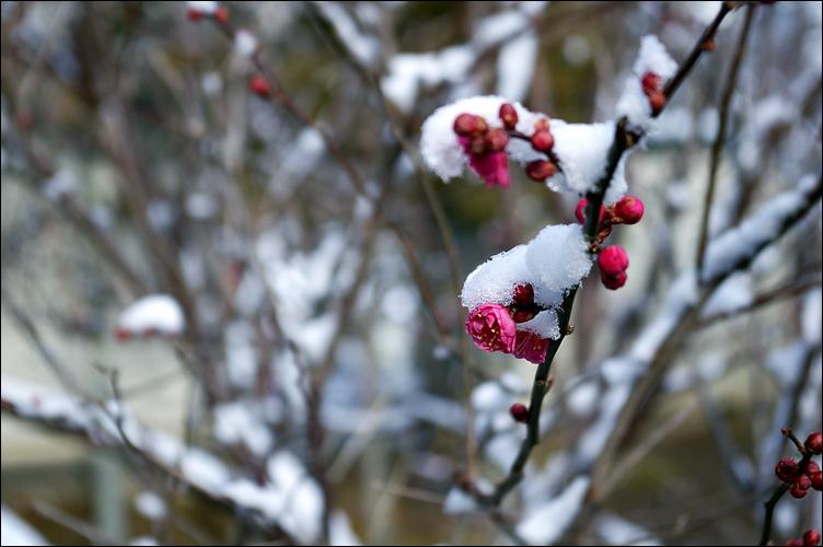 2010奧州雙龍行 DAY3──雪化妝的白石城_c0073742_0252346.jpg