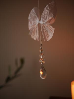 蝶々。_b0125443_2014666.jpg