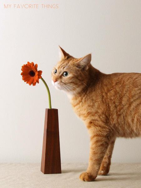 ガーベラと猫_c0157248_1291535.jpg