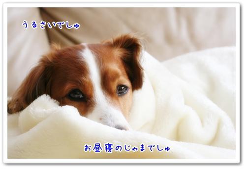 d0013149_11155364.jpg