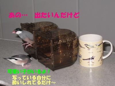b0158061_1957114.jpg