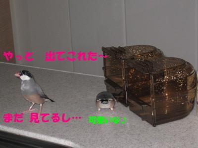 b0158061_19571834.jpg