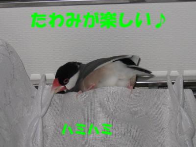 b0158061_195813100.jpg