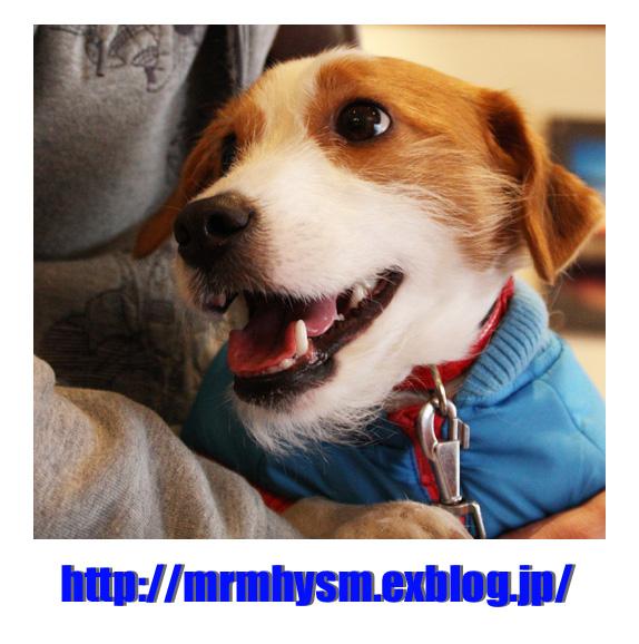 おもしろ写真_b0123371_1620159.jpg