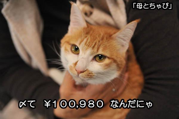 b0141397_11561391.jpg