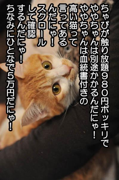b0141397_1223352.jpg