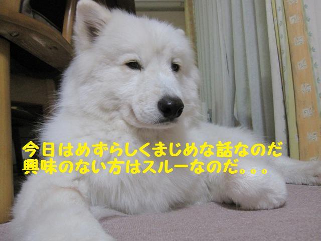 f0212597_859652.jpg