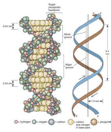 たばこでDNAまで老化 _e0097212_136681.jpg