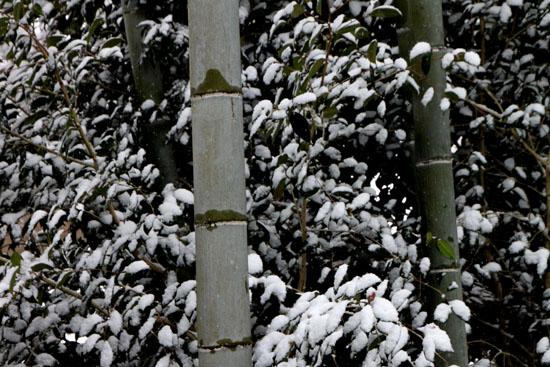 宝泉院 雪景色_e0048413_21242726.jpg