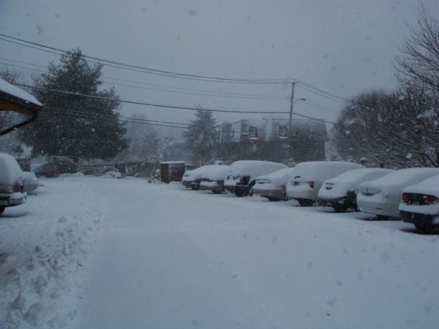 Snow Snow SnowStorm_e0147716_348344.jpg