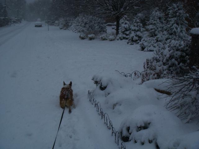 Snow Snow SnowStorm_e0147716_3491421.jpg