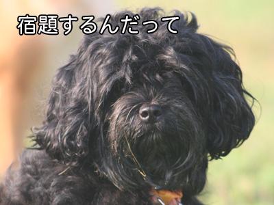 c0166018_218296.jpg