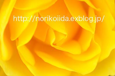 飯田典子blog*光と風の記憶*ぺ・ヨンジュンとバラに恋する写真家日記