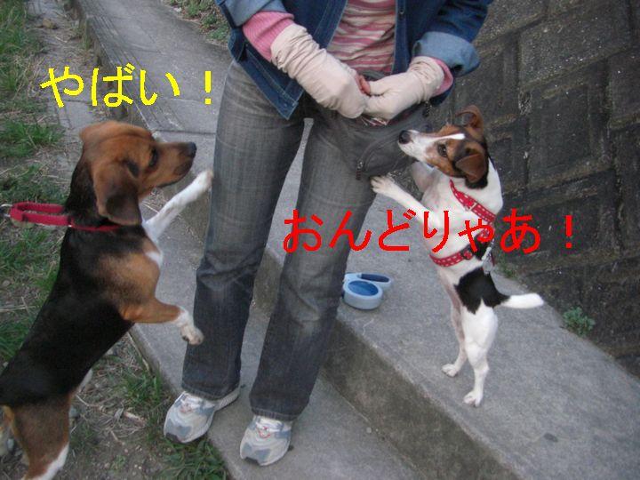 f0053952_1315110.jpg