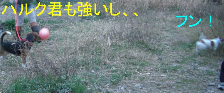 f0053952_13162294.jpg
