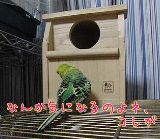f0196665_033347.jpg