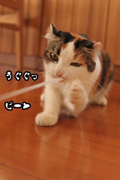 b0141397_11315096.jpg