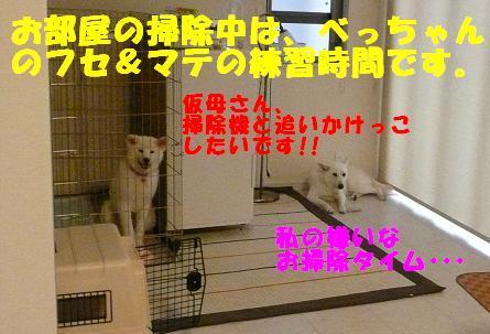 f0121712_83343.jpg