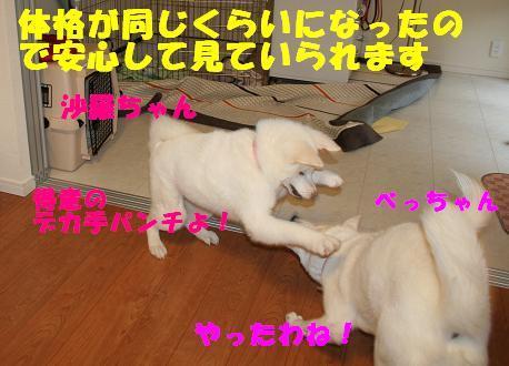 f0121712_87346.jpg