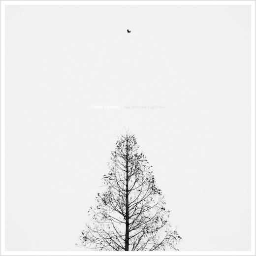 Metasequoia_e0117517_1954070.jpg