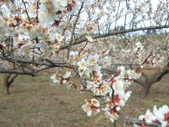 野菜畑に春の足音が.......寒い~寒い!_b0137932_18165858.jpg